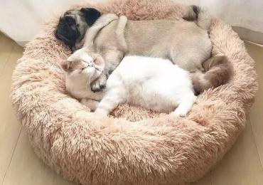 Calming Donut Pet Bed